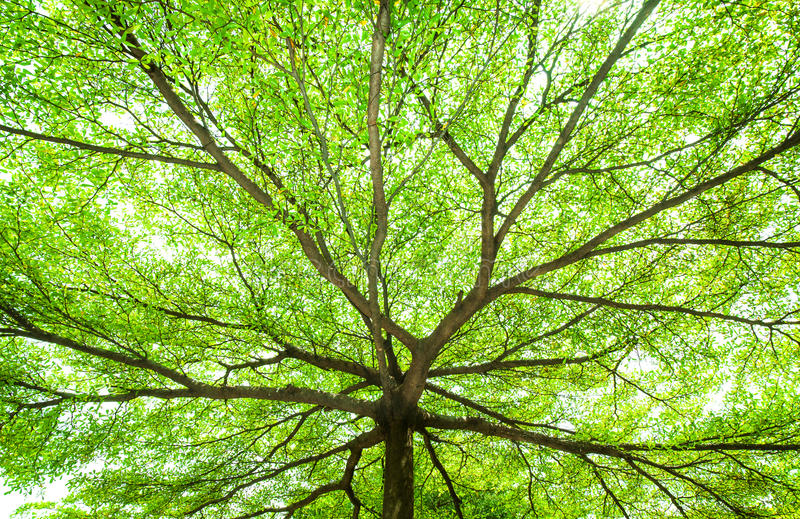 Download Under The Tree With Spread Branch And Green Leaves Stock Photo - Image: 26763374
