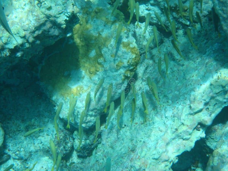 Under vattenfisk fotografering för bildbyråer