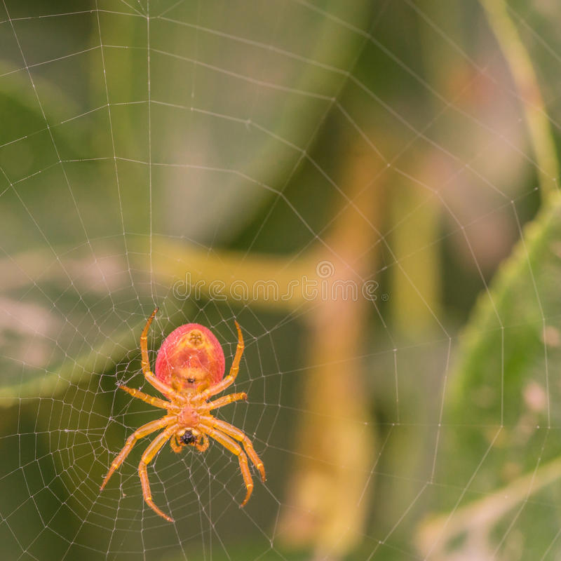 Download Under View of a Spider stock photo. Image of araneae - 74989256