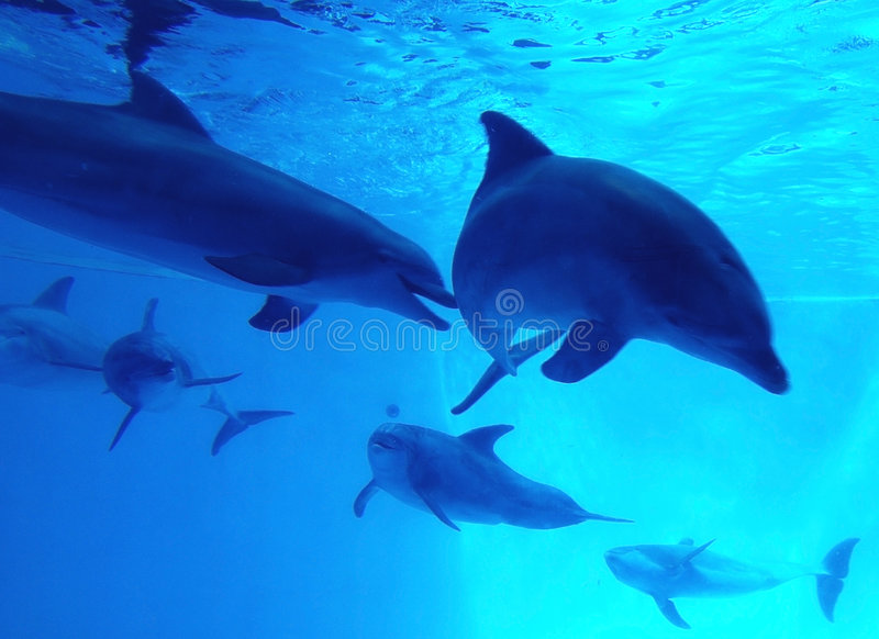 Under water. Dolphins swimming under water and playing