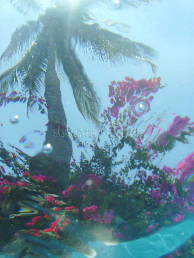Under Water View Of Palm Tree Stock Photography