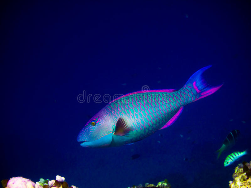 Under water world at Maldives royalty free stock photography