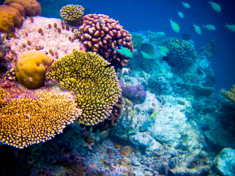 Under water world at Maldives stock photo