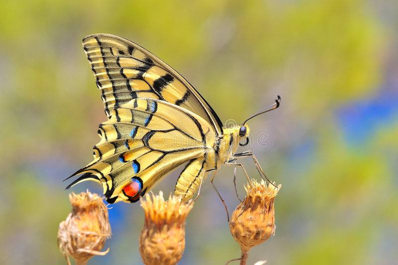 underbar fjärilsnatur royaltyfri bild