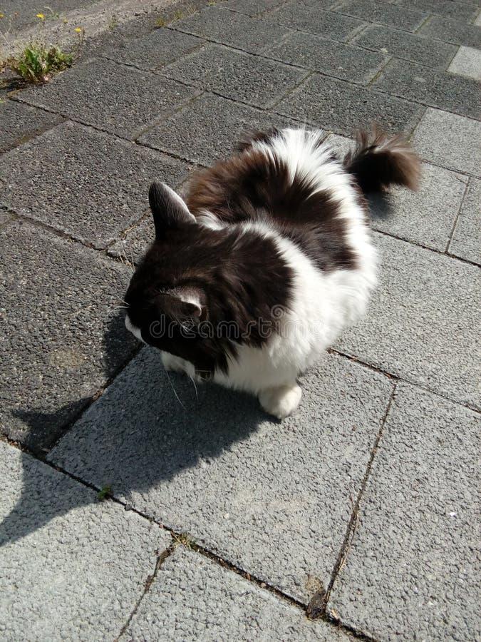 Underbar katt arkivfoton