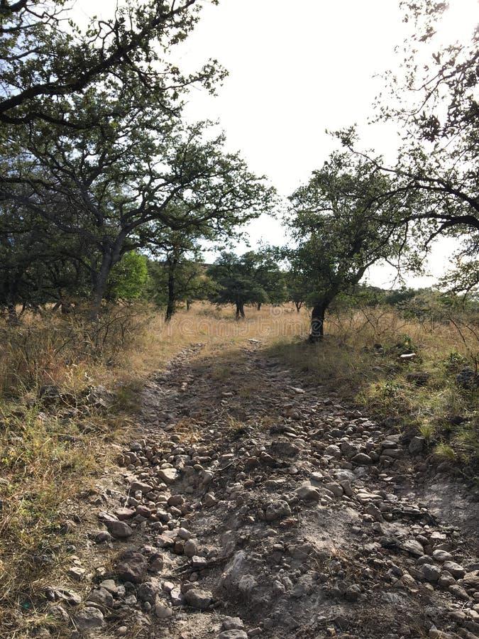 Underbar natur i Latoppiga bergskedjan en-Chihuahua, Mexico arkivbilder