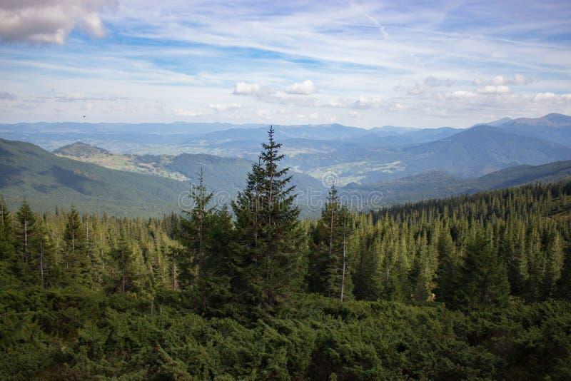 Underbar panoramautsikt av Carpathians berg, Ukraina Vintergröna Forest Hills Barrskog arkivbilder