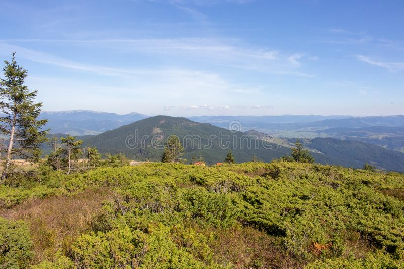 Underbar panoramautsikt av Carpathians berg, Ukraina Vintergröna Forest Hills Carpathians berglandskap fotografering för bildbyråer