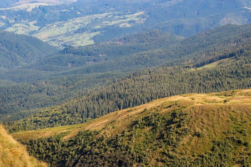Underbar panoramautsikt av Carpathians berg, Ukraina Vintergröna mest gorest kullar Carpathians berglandskap royaltyfria bilder