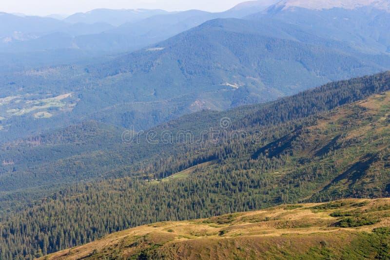 Underbar panoramautsikt av Carpathians berg, Ukraina Vintergröna mest gorest kullar Carpathians berglandskap arkivbild
