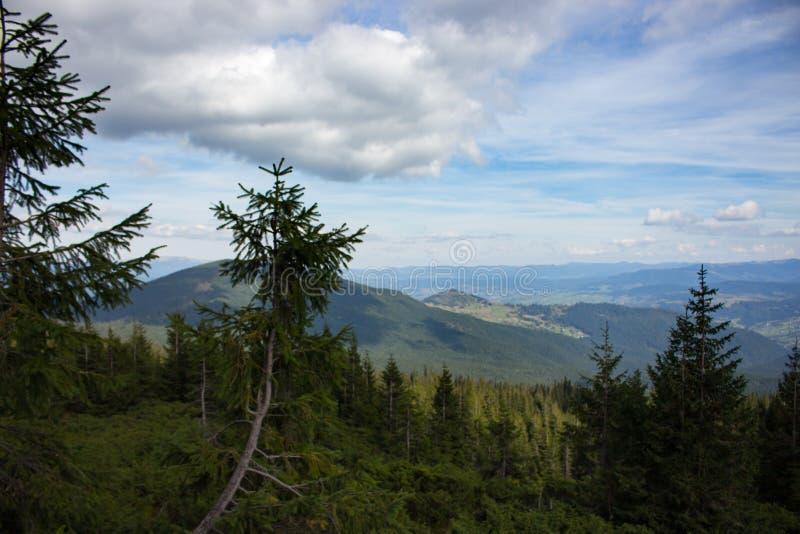 Underbar sikt av Carpathians berg med barrträdförgrund Berg med härlig himmel och moln royaltyfria bilder
