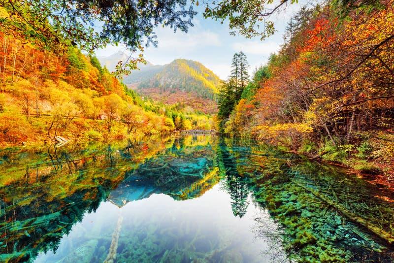 Underbar sikt av fem blomma sjön bland nedgångträn arkivbilder