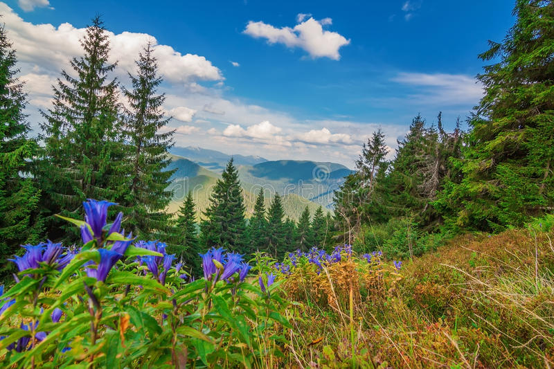 Underbar sikt av landskapet med berg Carpathians fotografering för bildbyråer
