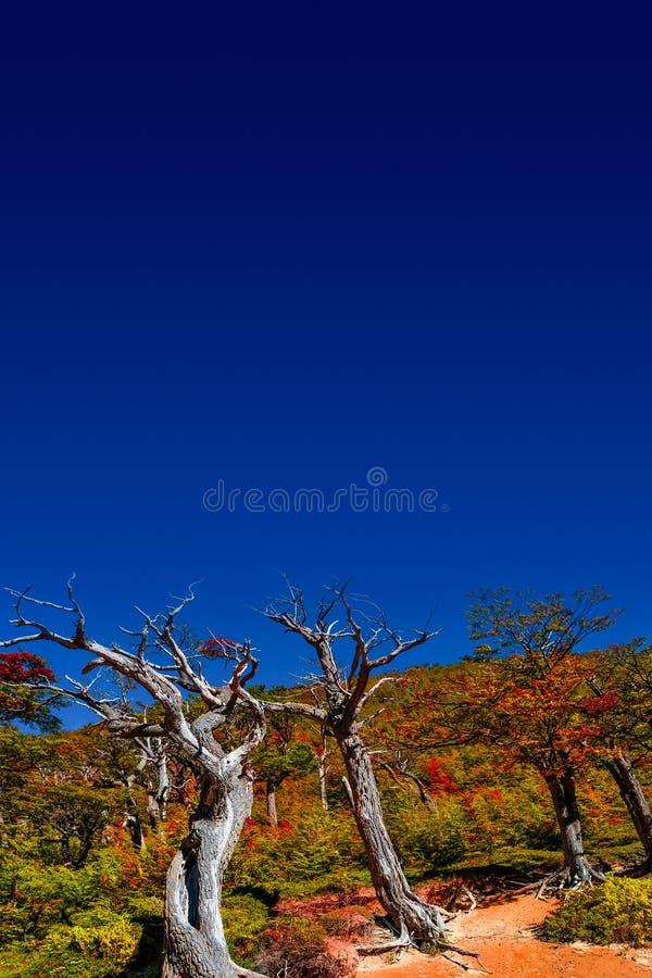Underbar sikt på den Torres del Paine nationalparken i den guld- hösten, Patagonia, Chile royaltyfria foton