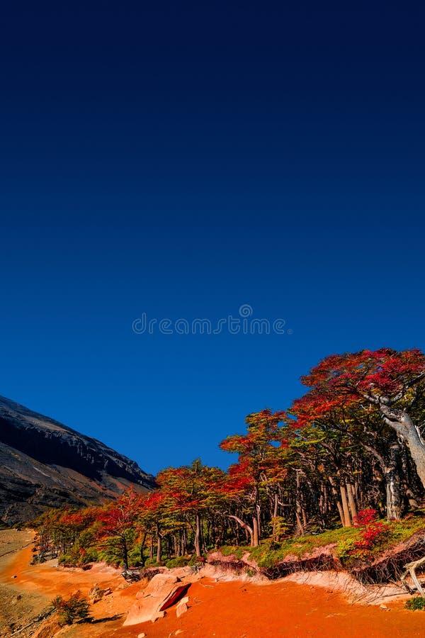 Underbar sikt på den Torres del Paine nationalparken i den guld- hösten, Patagonia, Chile royaltyfri bild
