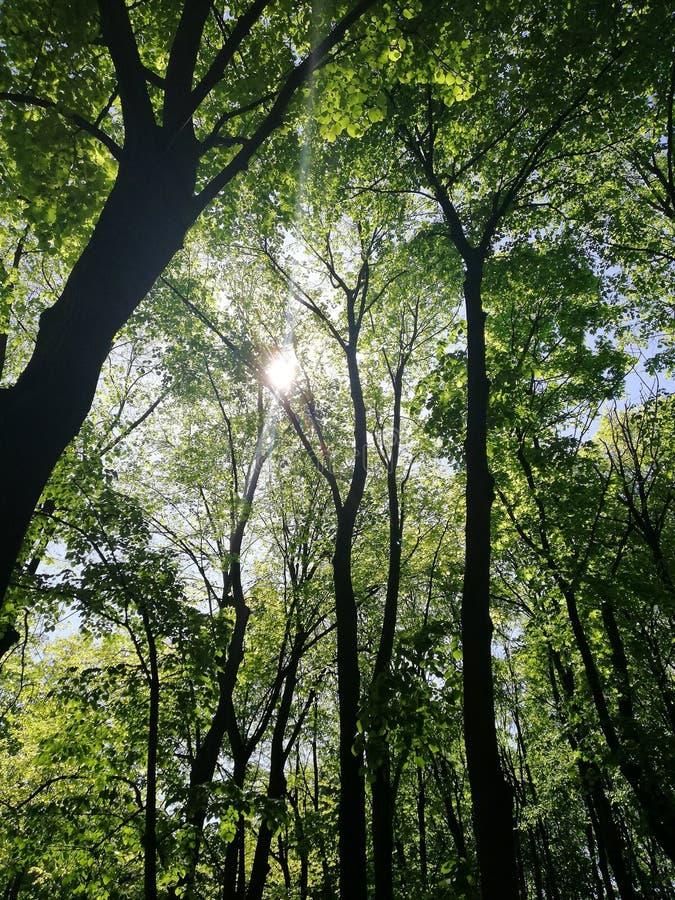 Underbar skog och sol som bryter till och med filialerna arkivfoto