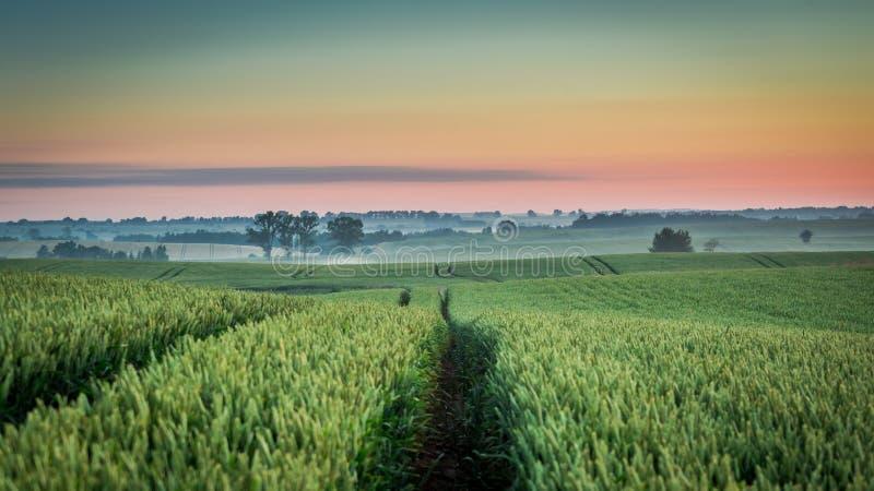 Underbar soluppgång på det dimmiga fältet i sommar arkivbilder