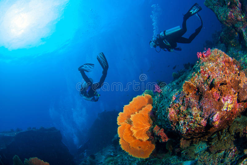 Underbar undervattens- värld med dykare på korallreven och a arkivbilder