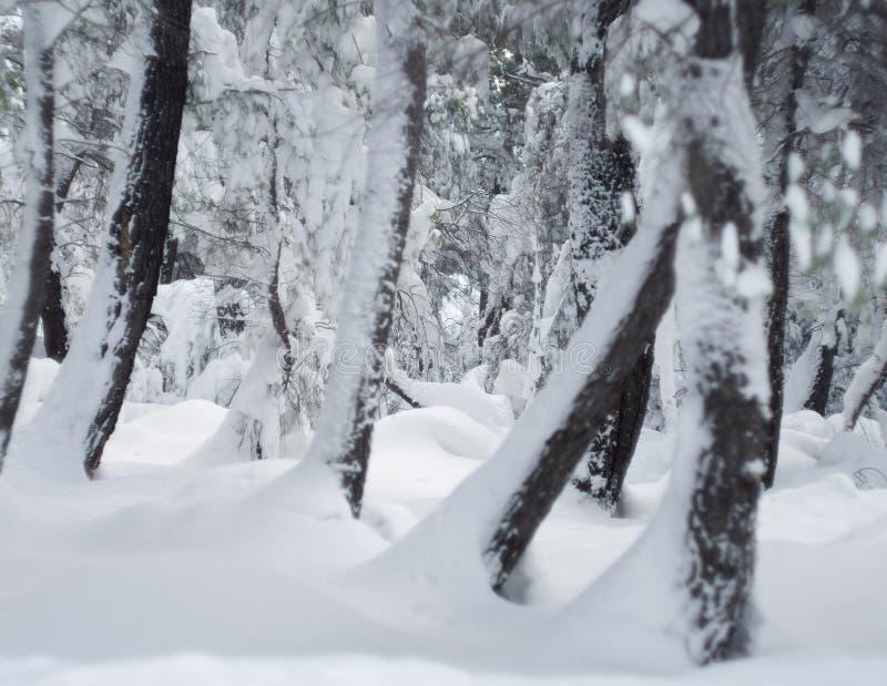 Underbar vinter f?r panoramautsikt med massor av sn? och sn?drivor i en grekisk by p? ?n av Evia, Grekland royaltyfri fotografi