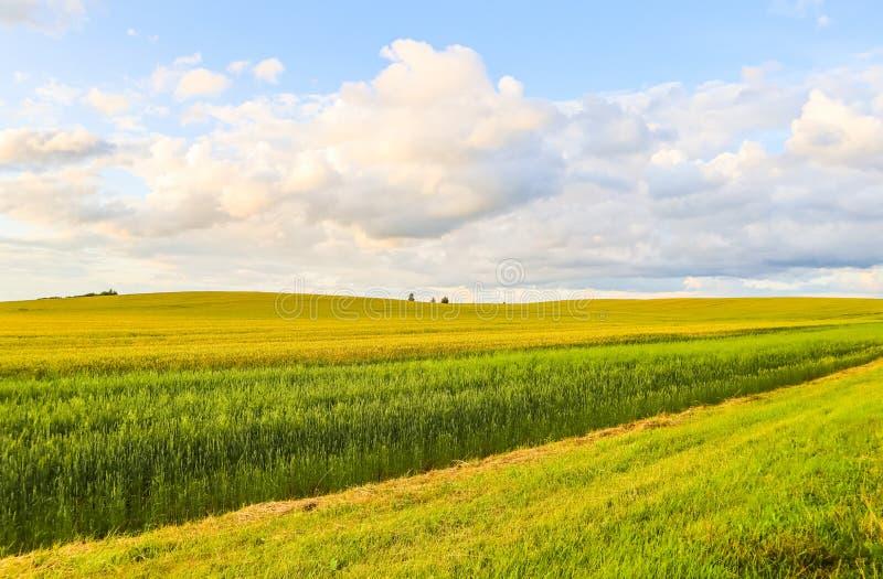 Underbart fält, kullar, träd och blå himmel med moln i bygden H?sten landskap arkivfoton