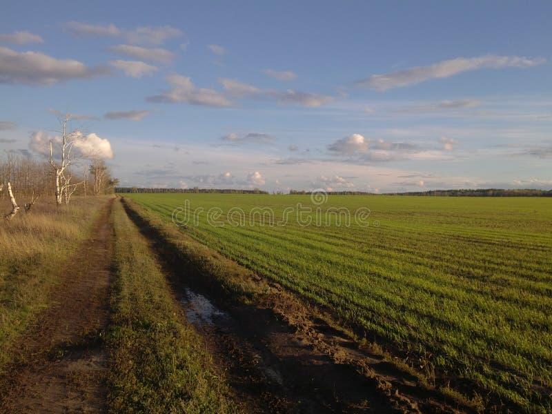 underbart landskap av det gröna fältet royaltyfria bilder