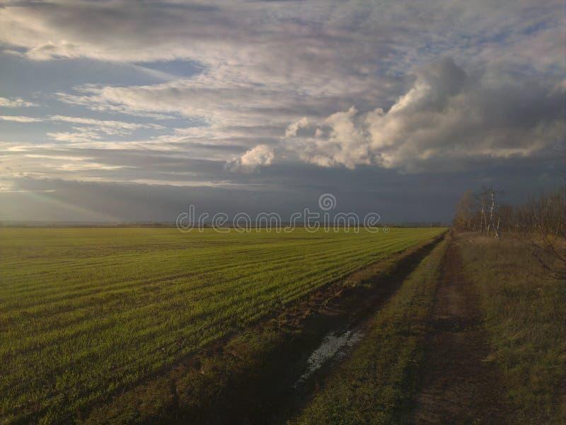 underbart landskap av det gröna fältet royaltyfri bild