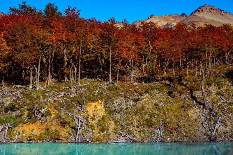 Underbart landskap av Patagonia` s Tierra del Fuego National Par arkivfoto