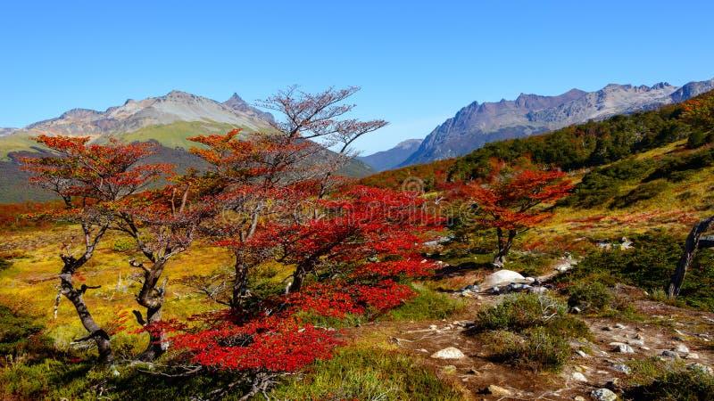 Underbart landskap av Patagonia` s Tierra del Fuego National Par royaltyfria foton