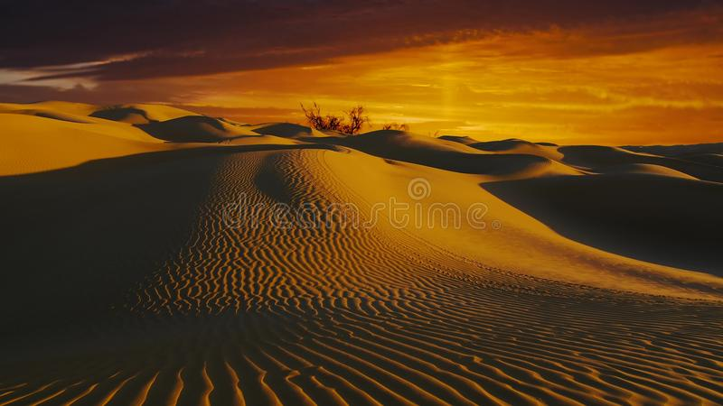 Underbart landskap för Sahara öken Dyner på solnedgången arkivfilmer