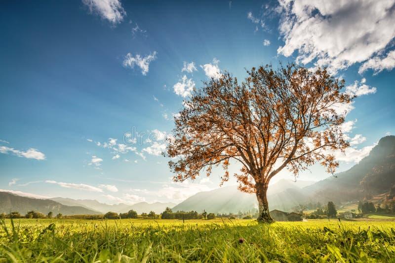 Underbart nedgångträd på den gröna ängen royaltyfria bilder