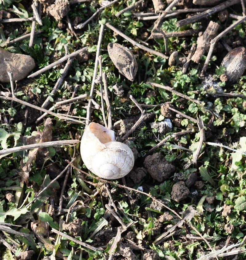 underbart snäckskal i fältet arkivfoto