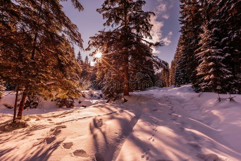 Underbart vintersolnedgång i bergsskogen Amazing, picturesque scen helgdag retroformat royaltyfria bilder