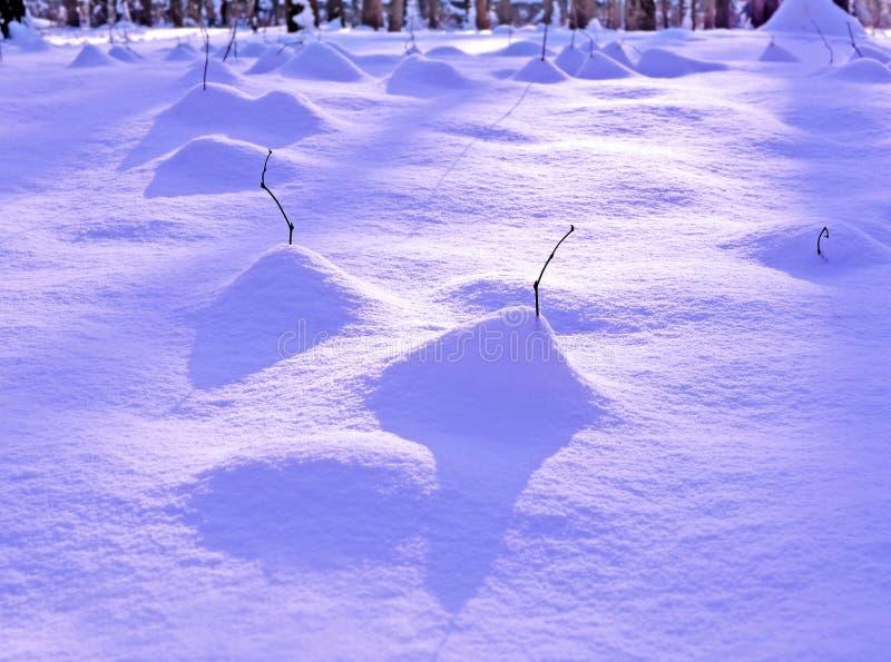 Underbrush в утре зимы стоковые изображения