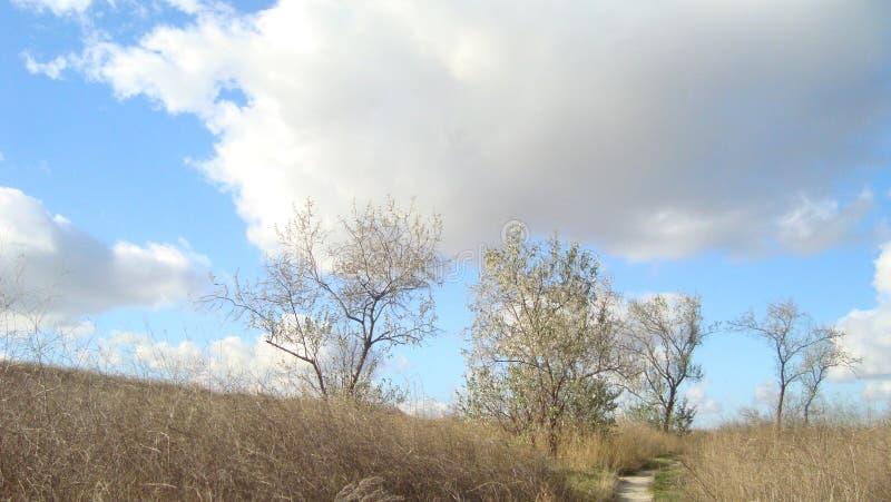 Underdimensionerade träd på ett bevuxet fält under moln av blå himmel på en klar dag royaltyfri foto