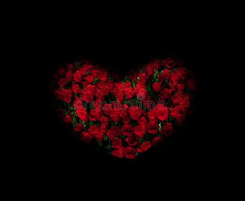 Underexposed red tulips stylized heart shape royalty free stock images