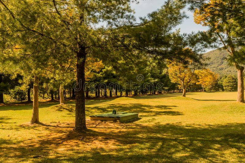 Underground maintenance access in park. Green, rectangle underground maintenance access point shaded by evergreen trees in public park on sunny afternoon royalty free stock image