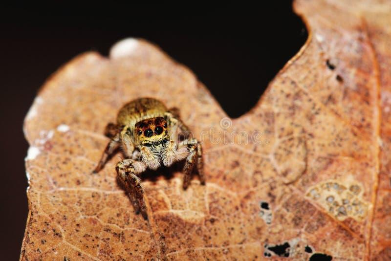 underhållande liten spindel royaltyfri fotografi