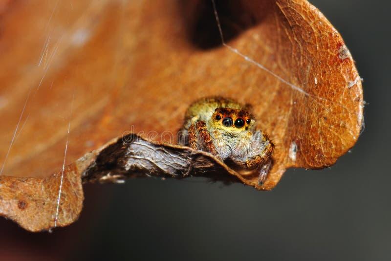 underhållande liten spindel arkivbilder