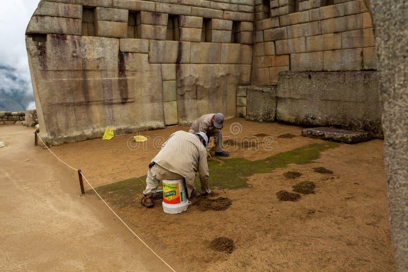Underhållsarbetare tar bort oönskad grön mossa på Macchu Picchu, 15th av marschen 2019 royaltyfri fotografi