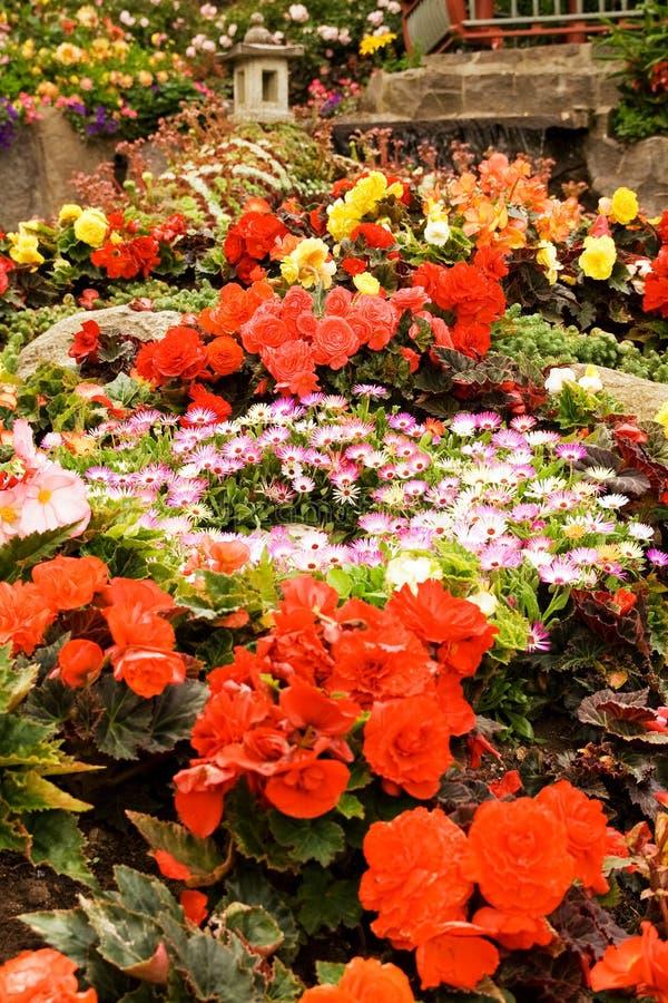 underlagblommaträdgård arkivbilder