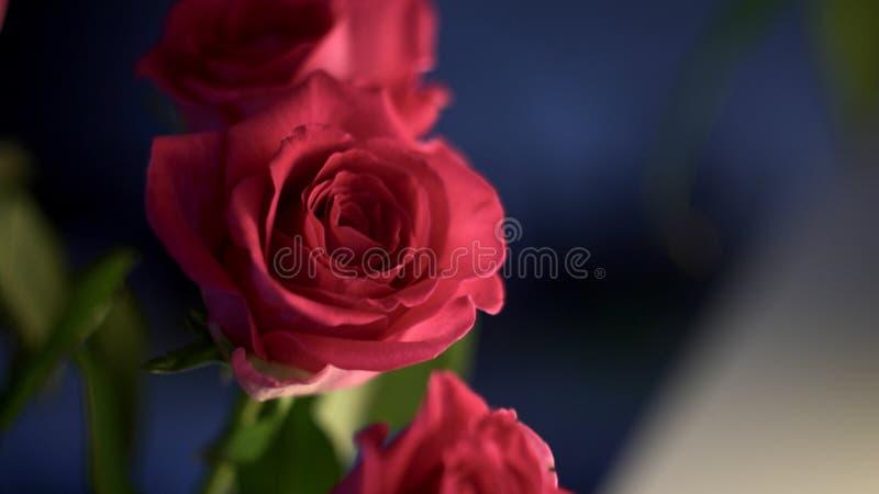 Underlit Rose Bouquet immagine stock