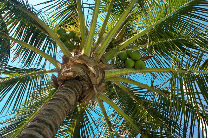 Underneath Palm Tree royalty free stock photography