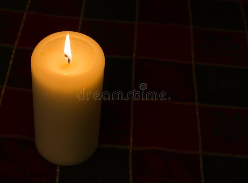 Undersöka lir mot mörk bakgrund med kopieringsutrymme royaltyfri foto