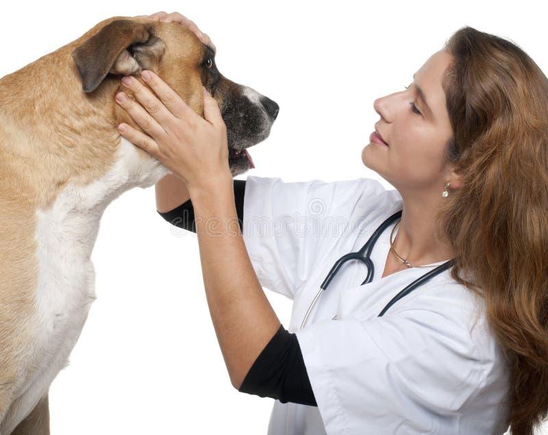 undersökande blandad vet för avelhund royaltyfri foto