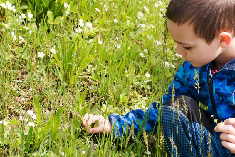 Undersökande natur för barn arkivbilder