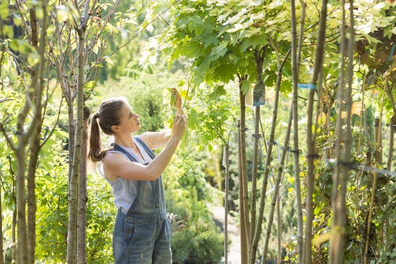 Undersökande sidor för kvinna på den trädgårds- mitten royaltyfri foto