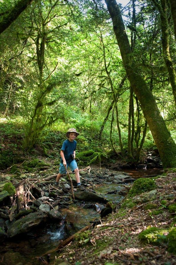 Undersökande skog för unge arkivbild