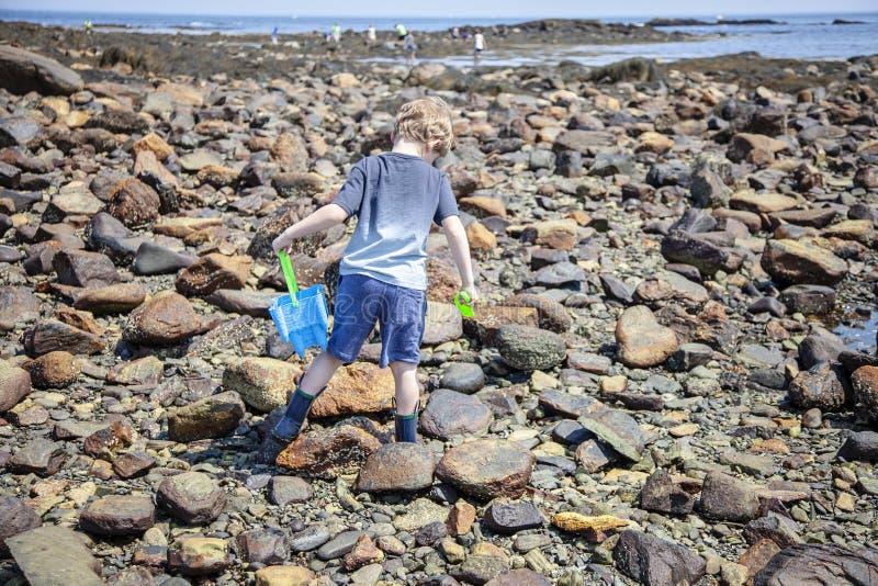 Undersökande tidvattentips för pojke på den New Hampshire kusten royaltyfri foto
