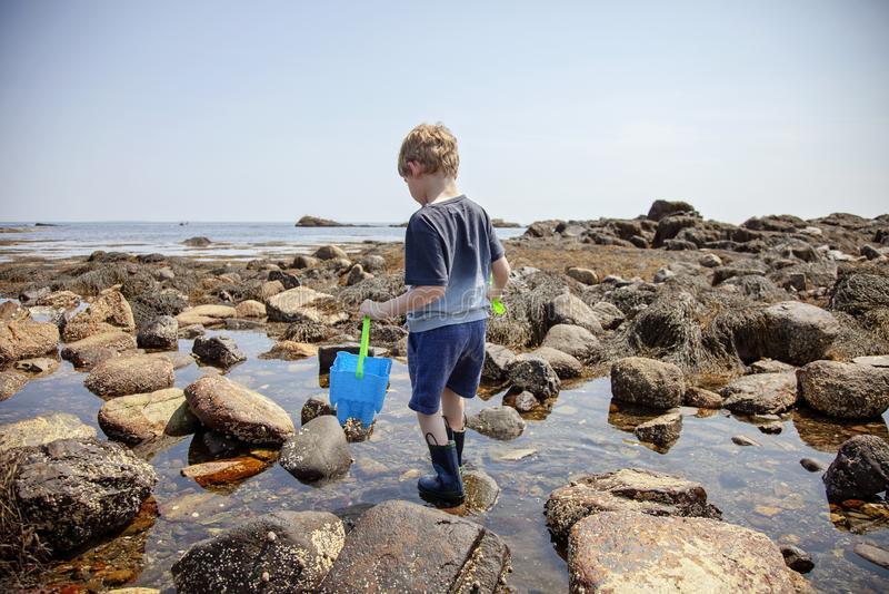 Undersökande tidvattentips för pojke på den New Hampshire kusten royaltyfri bild