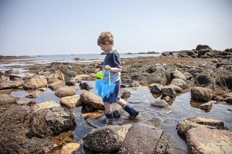 Undersökande tidvattentips för pojke på den New Hampshire kusten royaltyfria foton
